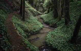 9513 Ωραία τοπία και μέρη, Άγρια Φύση, Όμορφα ζώα 4