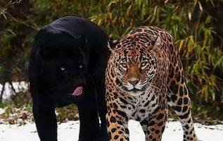 7920 Ωραία τοπία και μέρη, Άγρια Φύση, Όμορφα ζώα 6