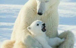 7633 Ωραία τοπία και μέρη, Άγρια Φύση, Όμορφα ζώα 3