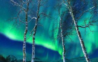 8064 Ωραία τοπία και μέρη, Άγρια Φύση, Όμορφα ζώα 7