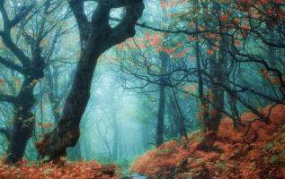 11108 Ωραία τοπία και μέρη, Άγρια Φύση, Όμορφα ζώα 6
