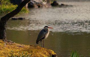 11422 Ωραία τοπία και μέρη, Άγρια Φύση, Όμορφα ζώα 3