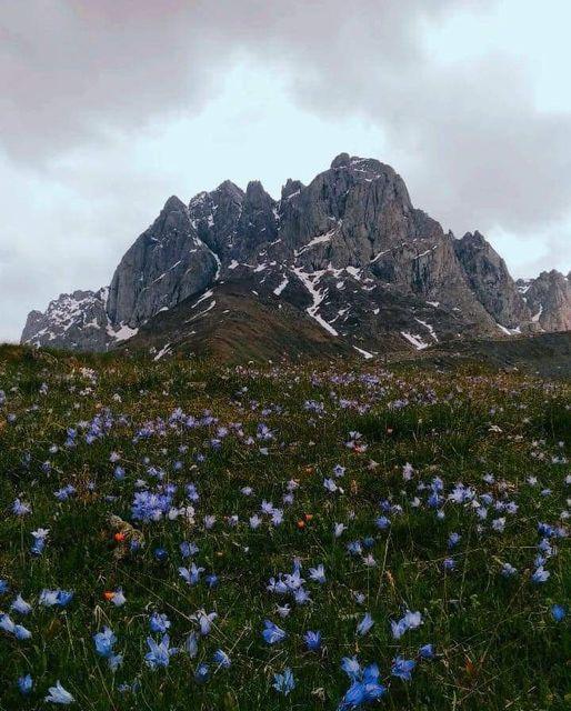 11568 Ωραία τοπία και μέρη, Άγρια Φύση, Όμορφα ζώα 1