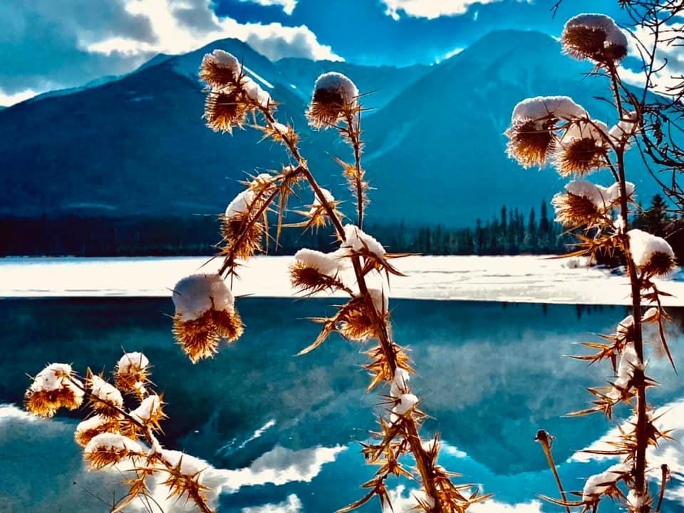 11492 Ωραία τοπία και μέρη, Άγρια Φύση, Όμορφα ζώα 1