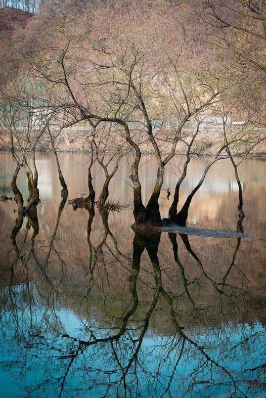 11406 Ωραία τοπία και μέρη, Άγρια Φύση, Όμορφα ζώα 3