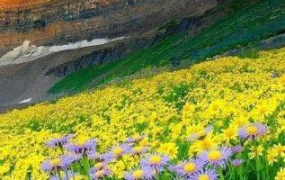 11208 Ωραία τοπία και μέρη, Άγρια Φύση, Όμορφα ζώα 2