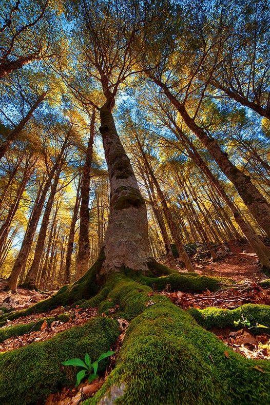 11424 Ωραία τοπία και μέρη, Άγρια Φύση, Όμορφα ζώα 3