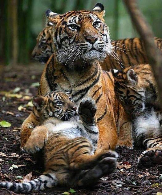 11410 Ωραία τοπία και μέρη, Άγρια Φύση, Όμορφα ζώα 3