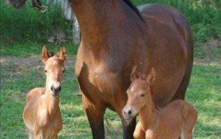 Η μαμά με τα μικρά της!... 5