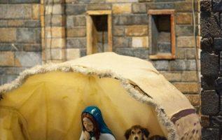 Απάγκιο στη φάτνη στην πλατεία Νεοχωρίου, βρήκαν αδέσποτα κουτάβια του χωριού, π... 2