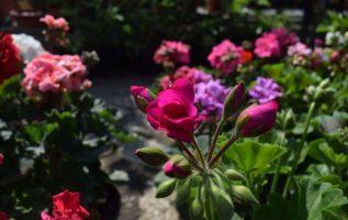 Όταν ψάχνεις κάτι όμορφο και το βρίσκεις σε κάτι πολύ απλό.Το λουλούδι είναι από... 3