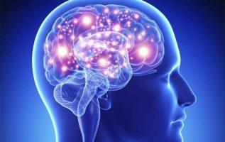 Γνωρίζετε ότι, ο ανθρώπινος εγκέφαλος ζυγίζει περίπου 3 κιλά και περιέχει περίπο... 7