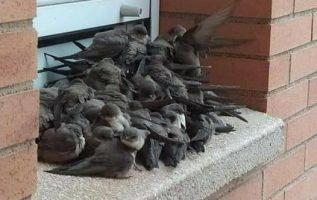 Αν βλέπετε πουλιά στα παράθυρα ή στα μπαλκόνια σας, μην τα τρομάζετε. Έχει πολύ... 3