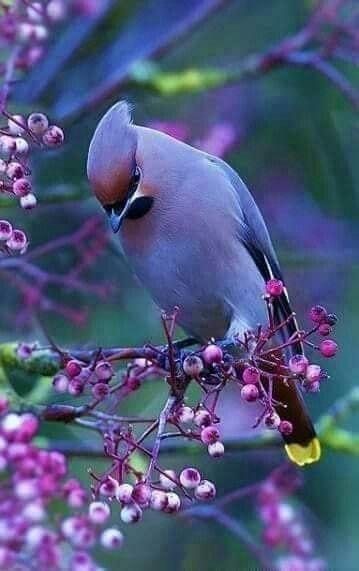 47149 Ωραία τοπία και μέρη, Άγρια Φύση, Όμορφα ζώα 3