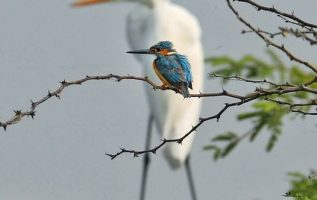 Kingfisher silhouetted against a crane, birdception... 4