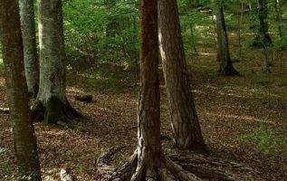 Spiral tree roots.... 4