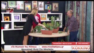 """Αρωματικά Φυτά και Βότανα σε Γλάστρα στο Μπαλκόνι - Τα Μυστικά του Κήπου """"στο Κόκκινο"""""""
