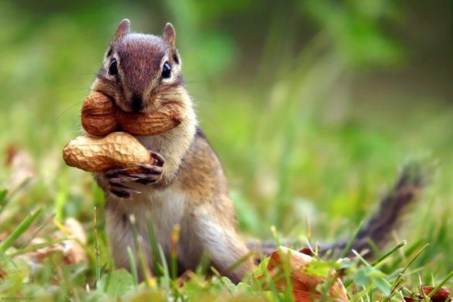 Γνωρίζετε ότι, εκατομμύρια δέντρα φυτεύονται τυχαία από σκίουρους που θάβουν του... 1