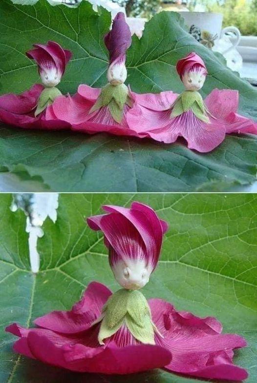Καταπληκτική φύση Κούκλα λουλούδι... 1