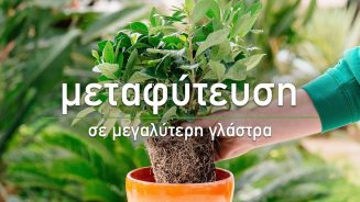 🌱 Μεταφύτευση φυτών σε μεγαλύτερη γλάστρα - Τα Μυστικά του Κήπου