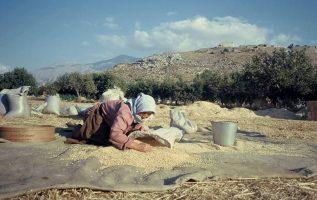 Η Παγκόσμια Ημέρας Αγρότισσας γιορτάζεται κάθε χρόνο στις 15 Οκτωβρίου.... 2