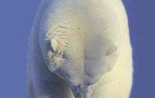 ′′ Παρακαλώ προσέχετε τον πλανήτη, δεν θέλω να εξαφανιστώ ′′... 4