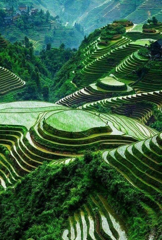 Ρύζι χωράφια - Ινδονησία... 1