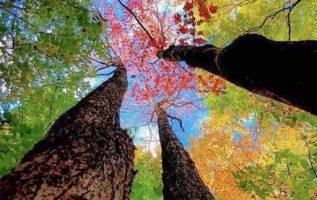 Τα δέντρα είναι ένα ποίημα που η γη γράφει στον ουρανό... 3