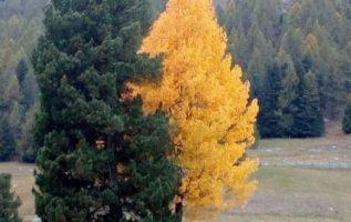 Αγκαλιάζουν και τα δέντρα...... 4