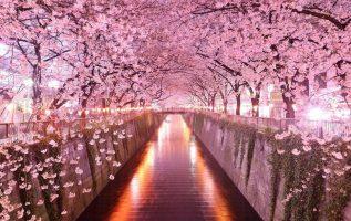 Ανθισμένες κερασιές στο Τόκυο, Ιαπωνία!!!!!!!!!!!!!!!!!!!!!!!... 4
