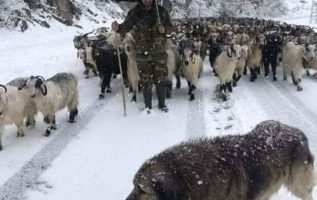 Άρχισαν τα δύσκολα για τους κτηνοτρόφους μας, ο Θεός να τούς δίνει δύναμη και υγ... 3
