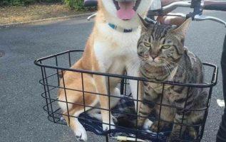 Η χαρά της γάτας που φεύγει από το σπίτι... 7