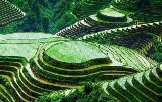 Ρύζι χωράφια - Ινδονησία... 4