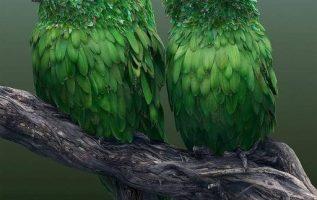 49041 Ωραία τοπία και μέρη, Άγρια Φύση, Όμορφα ζώα 5