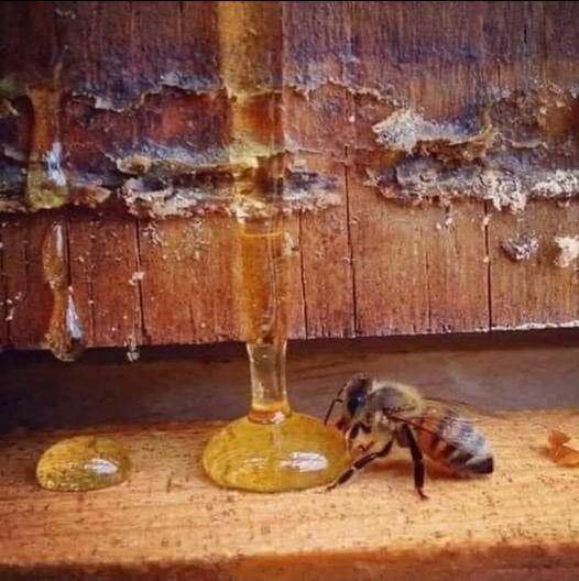 Οι ειδικοί λένε πως: «Όταν η μέλισσα εξαφανιστεί από τη γη, ο άνθρωπος έχει μόν... 1