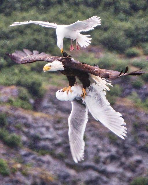 51603 Ωραία τοπία και μέρη, Άγρια Φύση, Όμορφα ζώα 3
