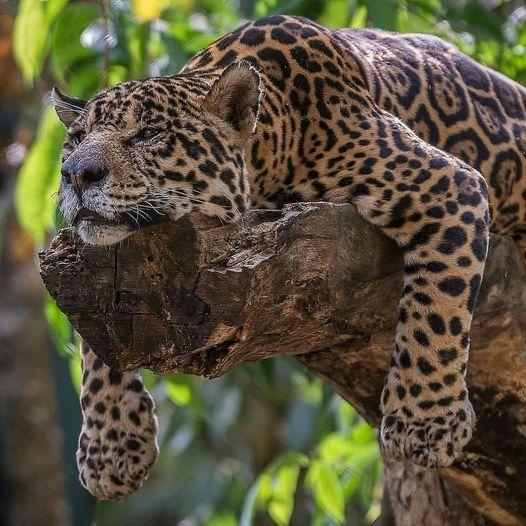 51984 Ωραία τοπία και μέρη, Άγρια Φύση, Όμορφα ζώα 3