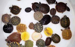 χελωνάκια...πανέμορφα... 3
