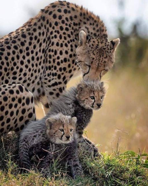 54076 Ωραία τοπία και μέρη, Άγρια Φύση, Όμορφα ζώα 3