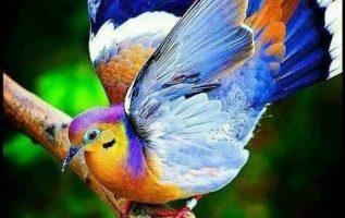 πανέμορφα χρώματα... 5