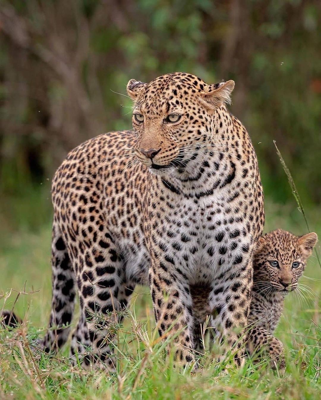 62912 Ωραία τοπία και μέρη, Άγρια Φύση, Όμορφα ζώα 9