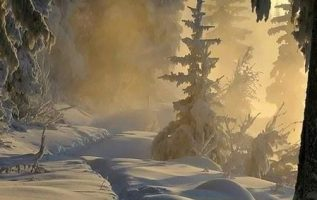 A nice walk in the winter forest is refreshing... 4