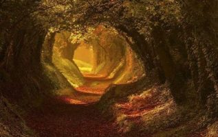 Ancient Roman Road, West Sussex, UK : Mark Andreas Jones... 4