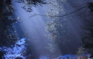 Magic in the Forest... 4