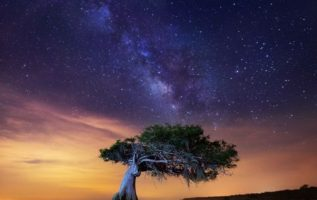 Milky way over lone Cypress, near Yeehaw Junction, Florida... 2