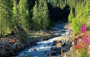 Nature Montana... 5