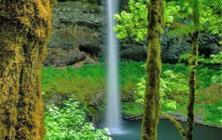 Silver Falls State Park,Oregon USA... 2