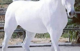 White horse 7