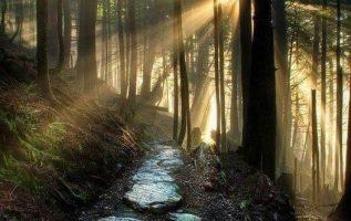 Wonder of Nature... 5