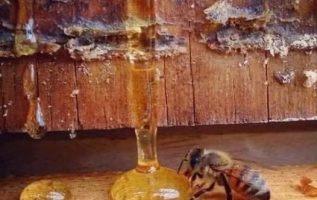 Οι ειδικοί λένε πως: «Όταν η μέλισσα εξαφανιστεί από τη γη, ο άνθρωπος έχει μόν... 2